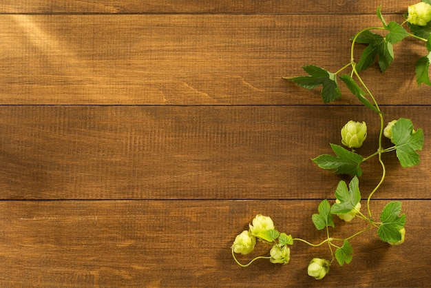Cones de lúpulo em madeira