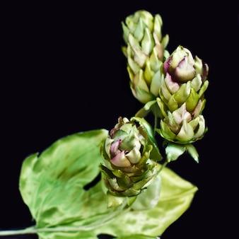 Cones de lúpulo isolados em um fundo preto. flores falsificadas de seda artificial
