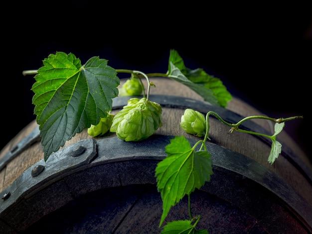 Cones de planta de lúpulo verde fresco em um velho barril de cerveja, vista superior