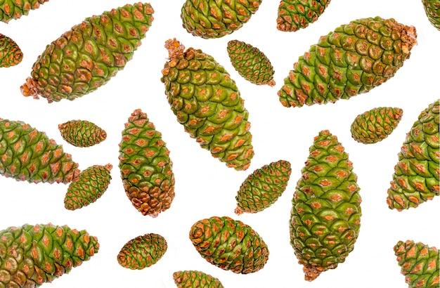Cones verdes de pinho selvagem em branco