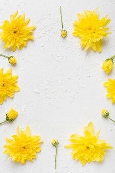 Configuração plana de arranjo de margaridas primavera