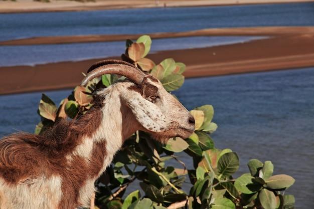 Confluência dos rios nilo branco e nilo azul em cartum, sudão