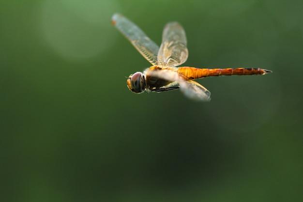 Congelamento de uma libélula estão voando animais selvagens
