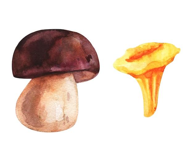 Conjunto aquarela de cogumelos da floresta