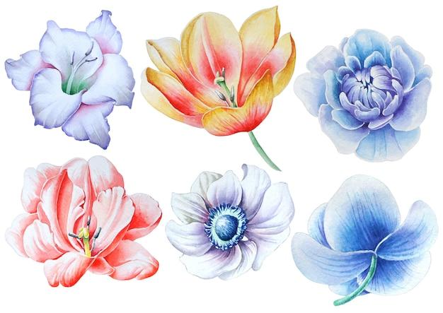 Conjunto com flores em aquarela. gladíolo. tulipa. rosa. peônia. anêmona. orquídea. desenhado à mão.