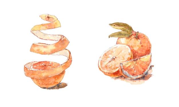Conjunto de aquarela com casca de laranja suculenta fatiada e inteira