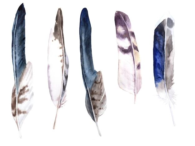 Conjunto de aquarela de penas. águia, coruja e penas de pato