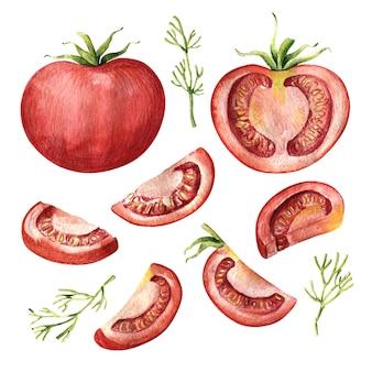 Conjunto de aquarela de tomate inteiro, metade e fatiado
