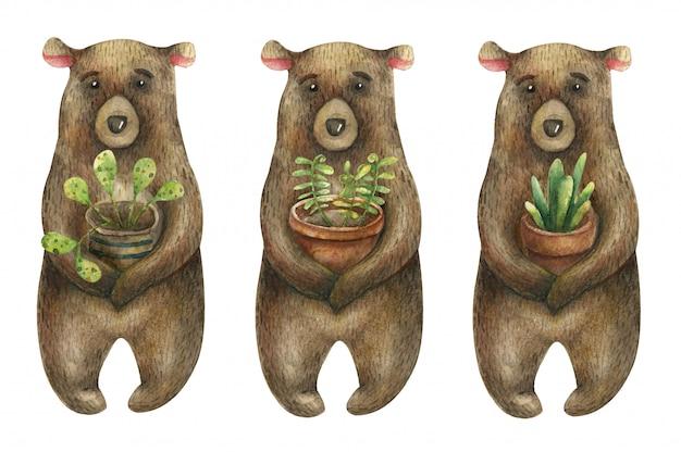Conjunto de aquarela ursos marrons bonitos, segurando um pote marrom com uma planta verde e doméstica.