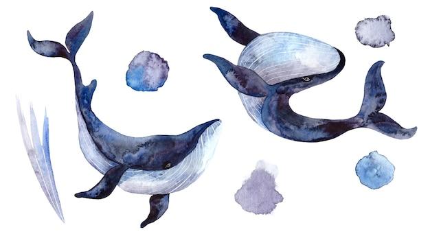 Conjunto de baleias em aquarela, ilustrações pintadas à mão isoladas no fundo branco, animais subaquáticos realistas