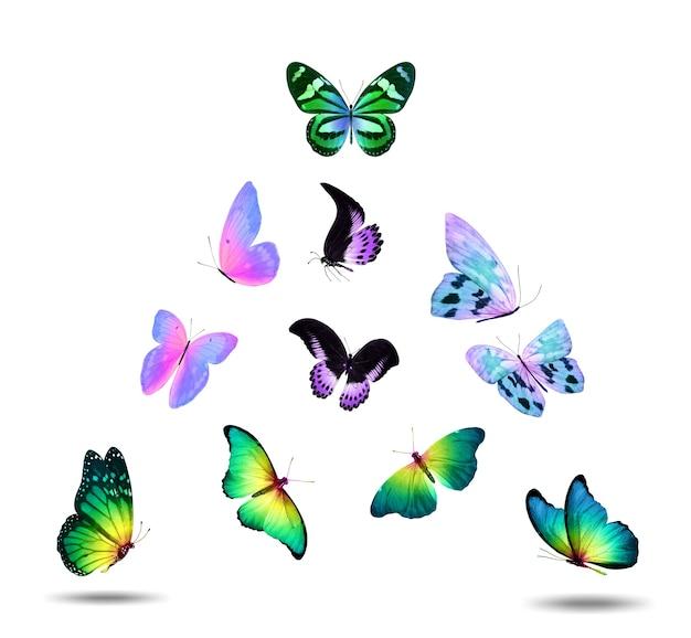 Conjunto de belas borboletas voadoras isoladas em um fundo branco. foto de alta qualidade