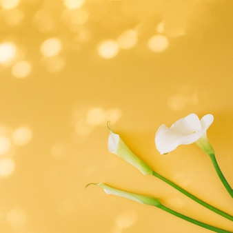 Conjunto de belas flores brancas frescas