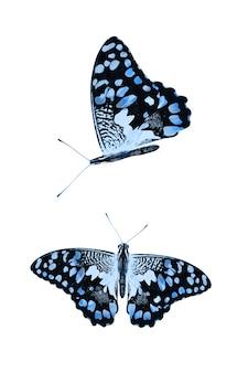 Conjunto de borboletas azuis isoladas em um fundo branco. foto de alta qualidade