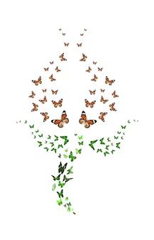 Conjunto de borboletas em forma de tulipa, isolado no fundo branco. botão vermelho. insetos tropicais. mariposas coloridas para design. foto de alta qualidade