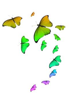Conjunto de borboletas tropicais coloridas isoladas em um fundo branco