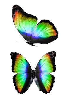 Conjunto de borboletas verdes isoladas em um fundo branco. foto de alta qualidade
