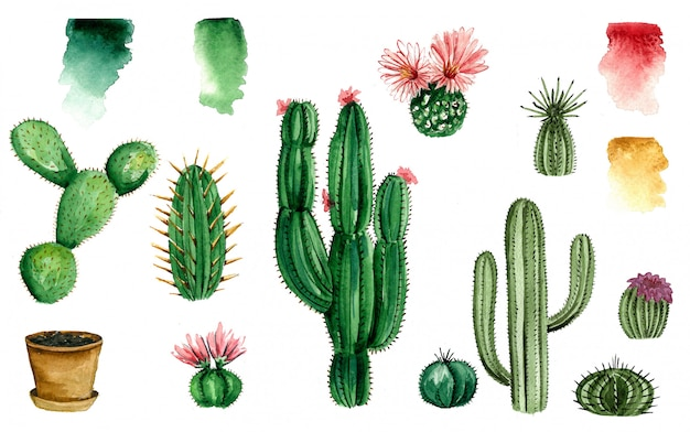 Conjunto de cacto em aquarela, suculenta, ilustração aquarela isolada no branco elementos de design em aquarela natural, coleção botânica