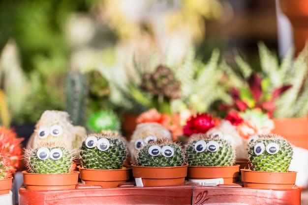 Conjunto de cactos com olhos decorativos em vasos