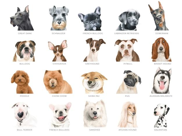Conjunto de cães em aquarela, 20 raças diferentes isoladas