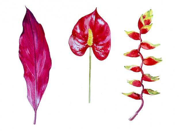 Conjunto de clipart de flores tropicais em aquarela. ilustração de flores exóticas.