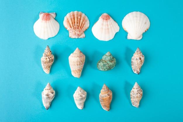 Conjunto de conchas na superfície azul