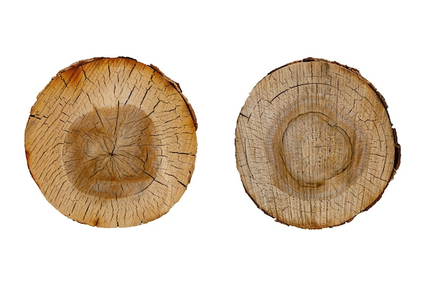 Conjunto de corte de log de vidoeiro isolado no fundo branco. foto de alta qualidade