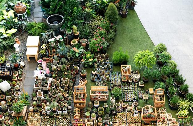 Conjunto de decoração de coleção de planta de casa de cacto