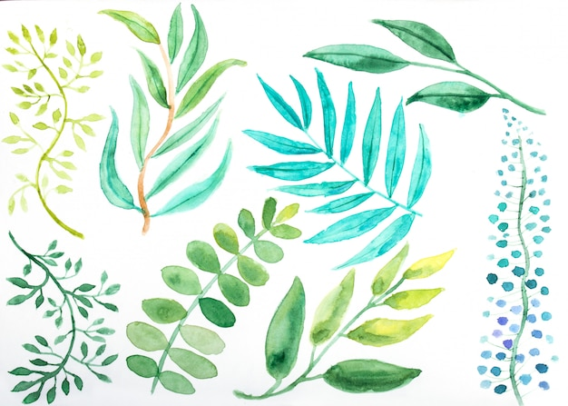 Conjunto de elementos florais em aquarela de mão desenhada