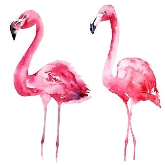 Conjunto de flamingo rosa aquarela.