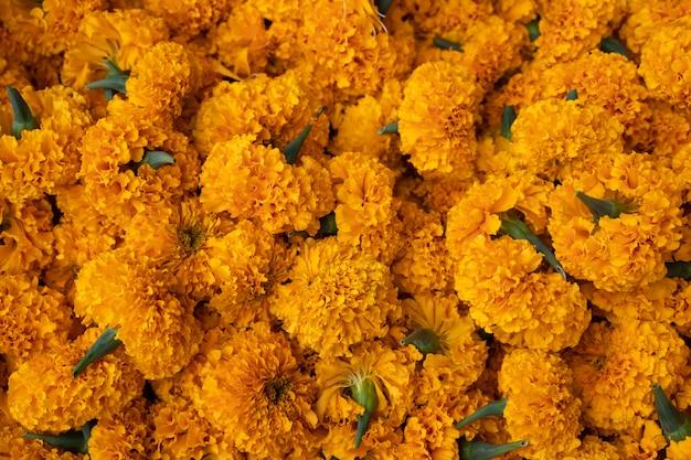 Conjunto de flores de crisântemo