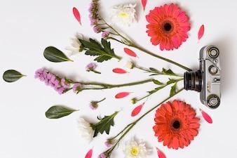 Conjunto de flores, folhas e câmera vintage