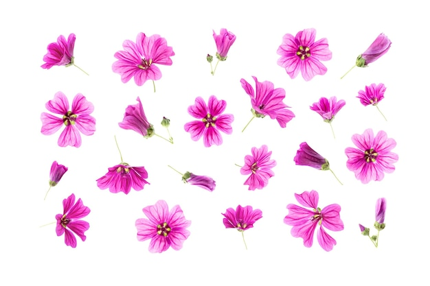 Conjunto de flores rosa naturais isoladas na superfície branca