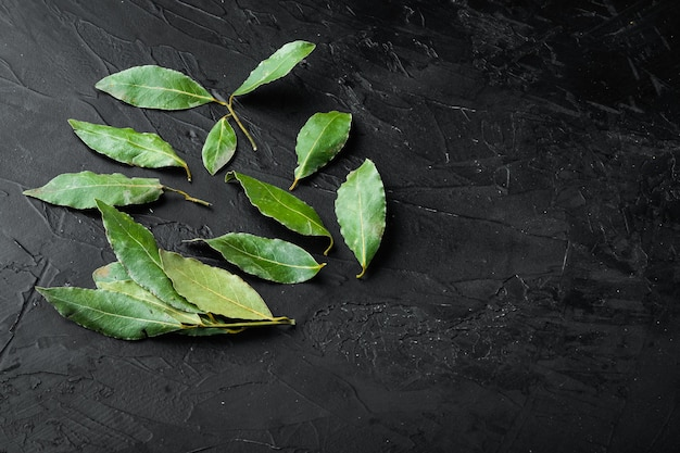 Conjunto de folhas de louro frescas, em mesa de pedra preta