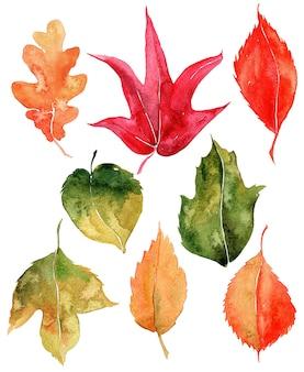 Conjunto de folhas de outono em aquarela.