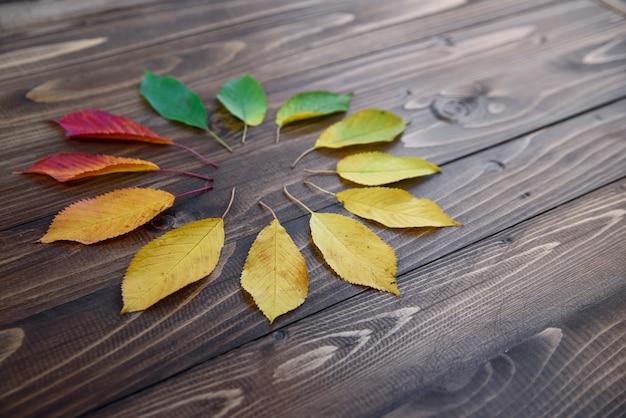 Conjunto de folhas de outono em um círculo passa de verde para vermelho em um fundo de madeira