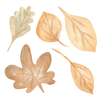 Conjunto de folhas de outono, isolado no fundo branco.