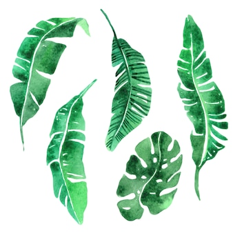 Conjunto de folhas tropicais.