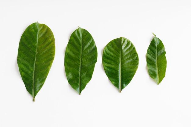 Conjunto de folhas verdes tropicais isolado no branco