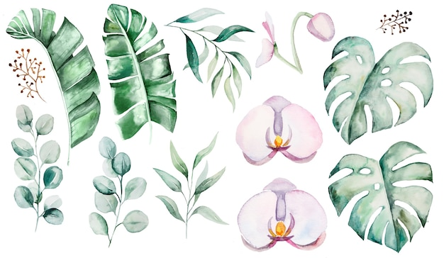 Conjunto de ilustração de flores e folhas tropicais em aquarela