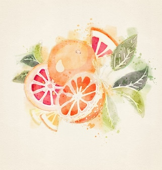 Conjunto de laranjas em aquarela isolado.