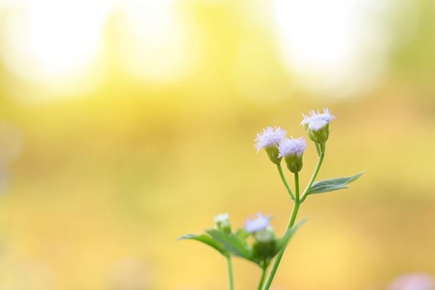 Conjunto de luz - flores roxas ou fim da flor da grama acima com fundo do borrão da natureza.