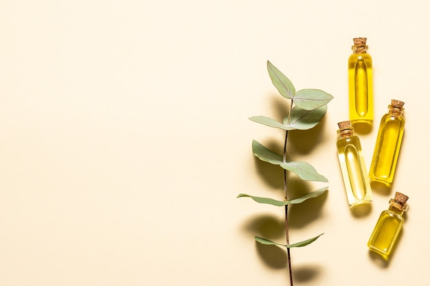 Conjunto de óleos essenciais orgânicos e folhas frescas de eucalipto aromático