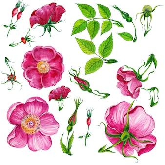 Conjunto de plantas de flores em aquarela