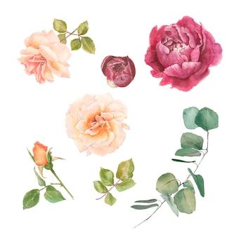 Conjunto de ramos de rosas delicadas para decoração peônia eucalipto