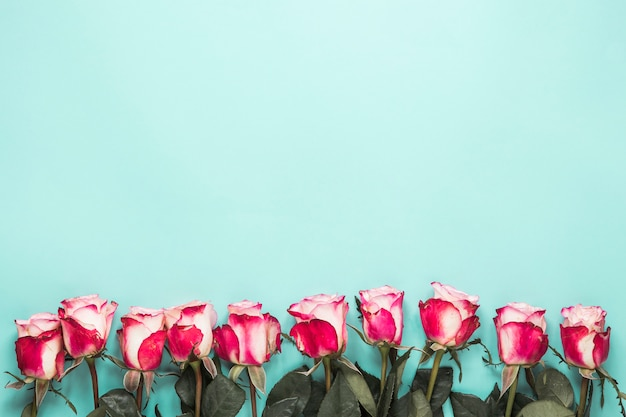 Conjunto de rosas frescas com folhas verdes