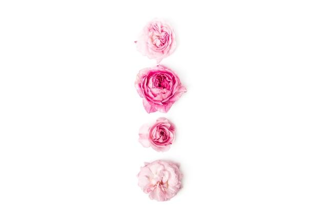 Conjunto de rosas selvagens, isolado na vista superior.