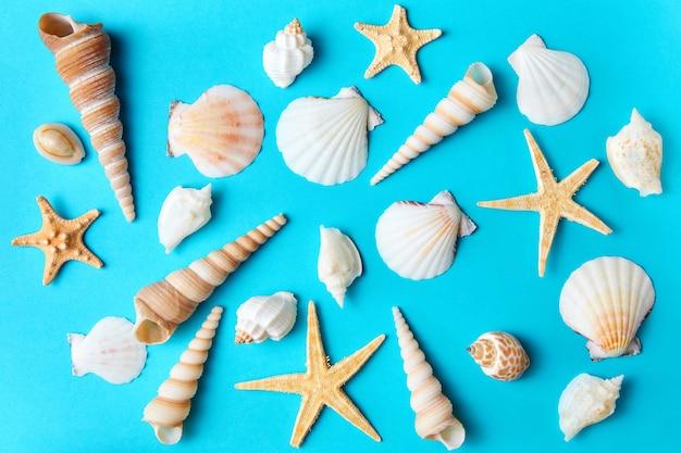 Conjunto de várias conchas e estrelas do mar em um fundo azul