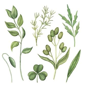 Conjunto de vegetação em aquarela, ervas verdes e plantas