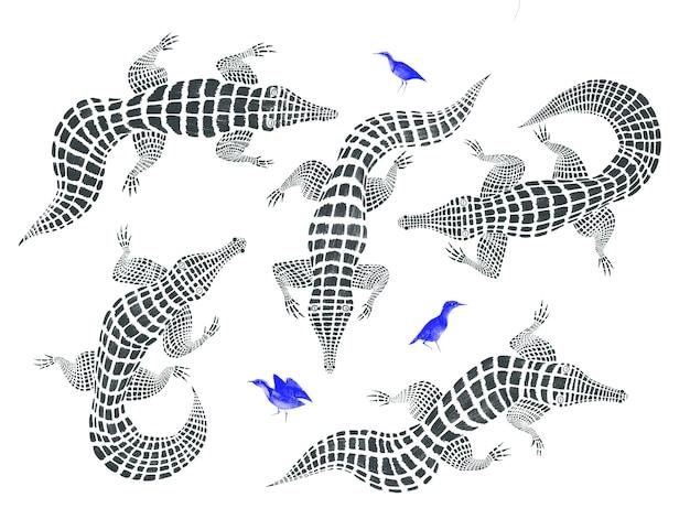 Conjunto desenhado à mão com crocodilos gráficos e pássaros azuis isolados no fundo branco