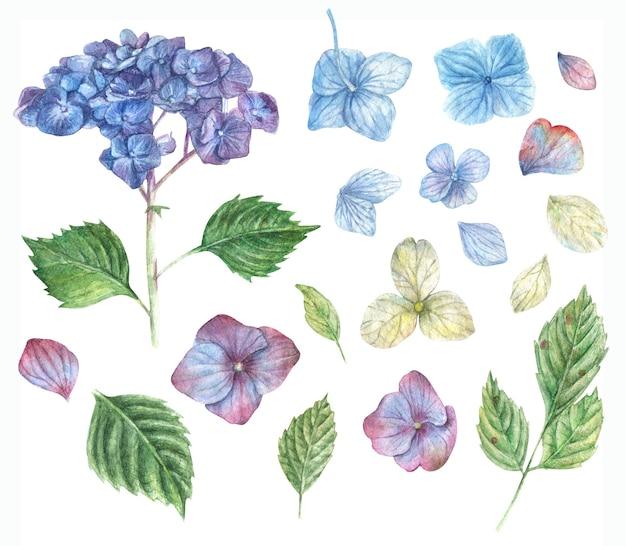 Conjunto desenhado à mão de flores de hortênsia roxas brancas e azuis e folhas verdes